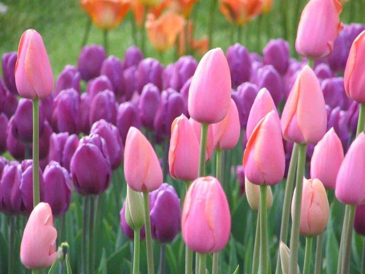 Per non perdersi le fioriture più belle c è il network Il Parco più bello  d Italia cbd90da6c44