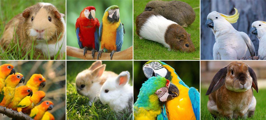 Animale-Domestico-RivistaDonna.com