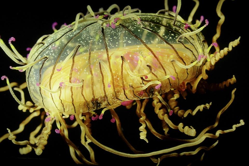 Meduse-RivistaDonna.com