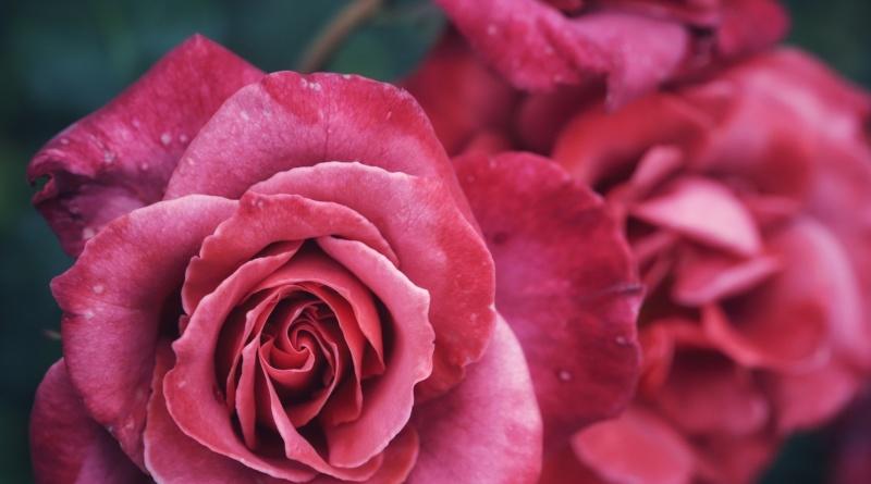 macro-rosa-rivistadonna.com_.jpg