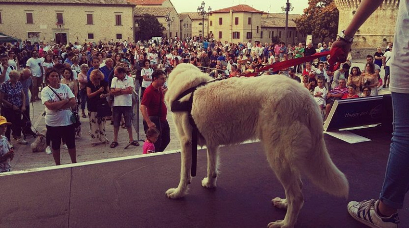 Cani-Finalmente-a-Casa-RivistaDonna.com