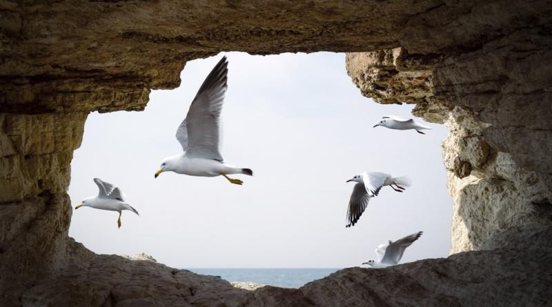 cave-freedom-rivistadonna.com